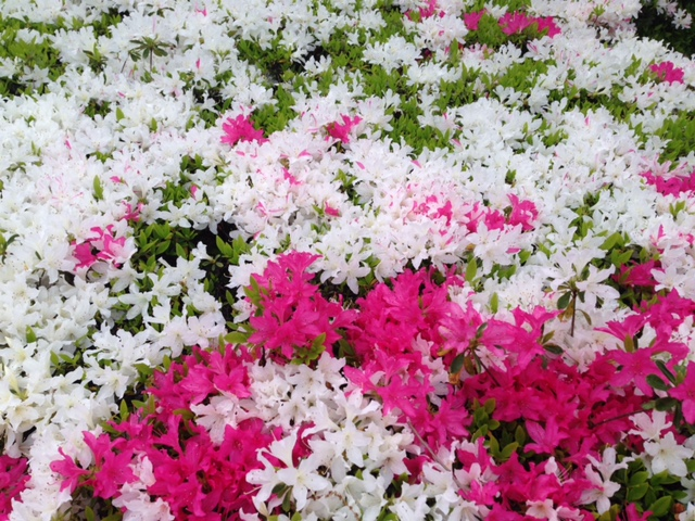 blog用花