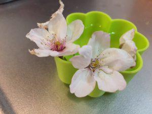 blog用 花